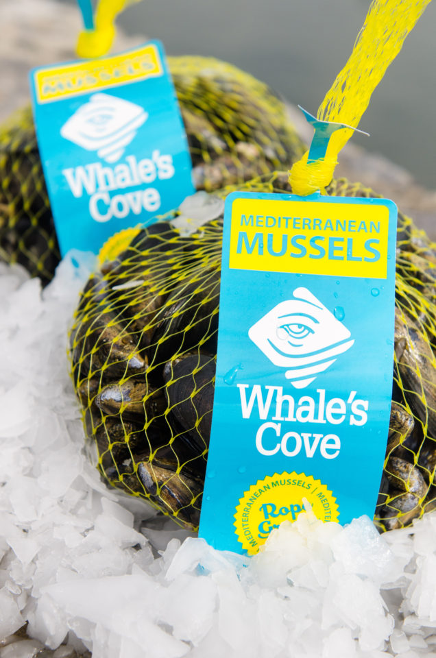 WHALE'S COVE MUSSEL   DiCarlo Seafood